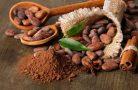 Полезные свойства какао бобов
