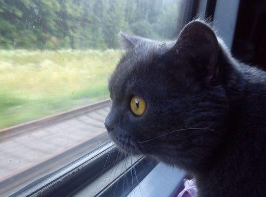 Как провозить животное в поезде?
