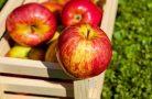 Как правильно хранить яблоки?
